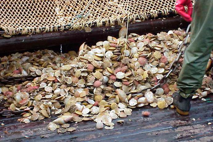 Revista Puerto - Pesca de vieira