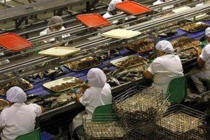Trabajadores peruanos 'low cost' procesan langostino patagónico.