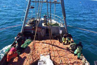 revista-puerto-pesca-de-langostino-en-chubut-00