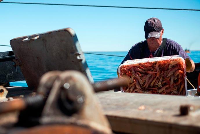 Revista Puerto - Marea de langostino en Rawson 08