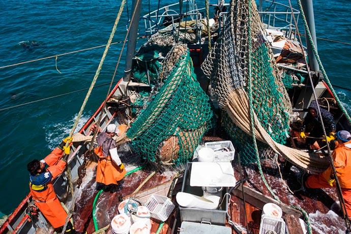 Revista Puerto - Marea de langostino en Rawson 15