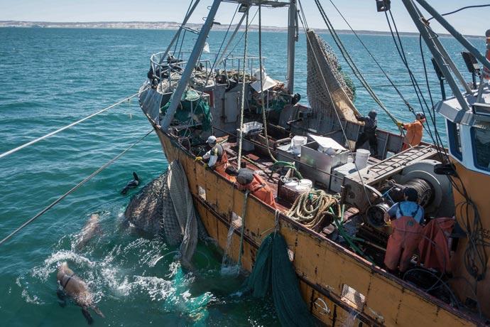 Revista Puerto - Marea de langostino en Rawson 34