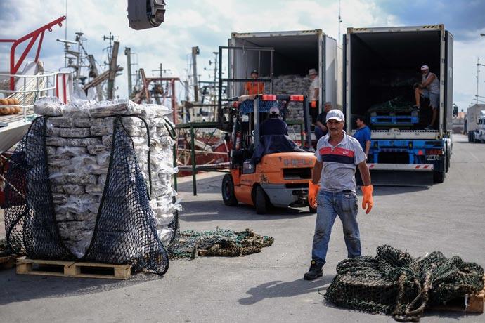 Revista Puerto - Desembarques de calamar