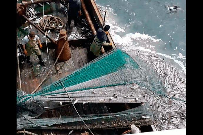 Informe de merluza hubbsi con fuerte llamado de atención a las autoridades