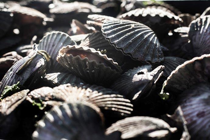 El CFP sigue aumentando la presión pesquera sobre el langostino