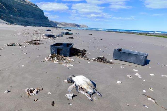 Revista Puerto - Cajones en las costas de Chubut 07