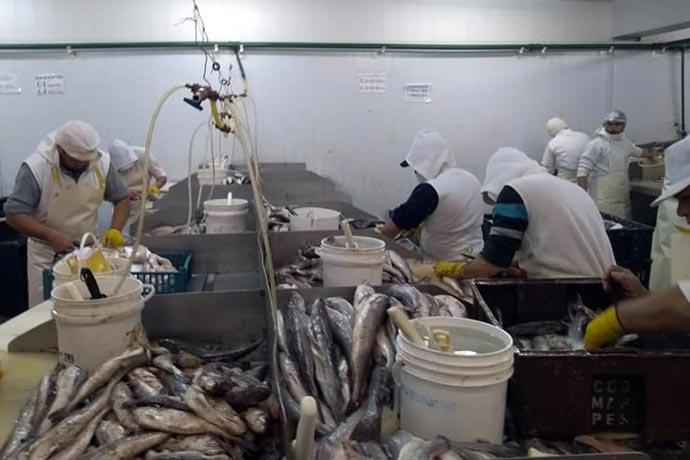 Revista Puerto - UTN y STIA capacitan trabajadores del pescado 01