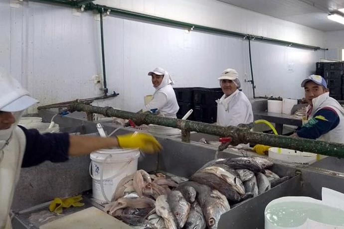 Revista Puerto - UTN y STIA capacitan trabajadores del pescado 02