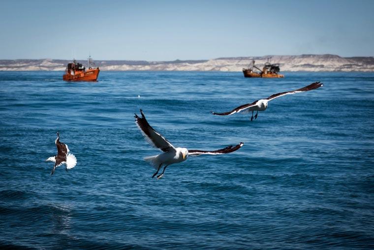 Revista Puerto - Pesca en el Mar Patagonico