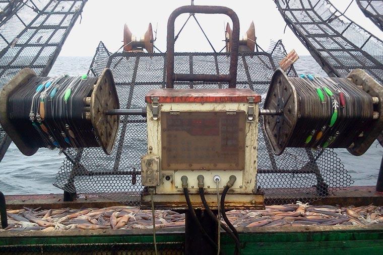 La temporada de calamar empezará el 10 de enero
