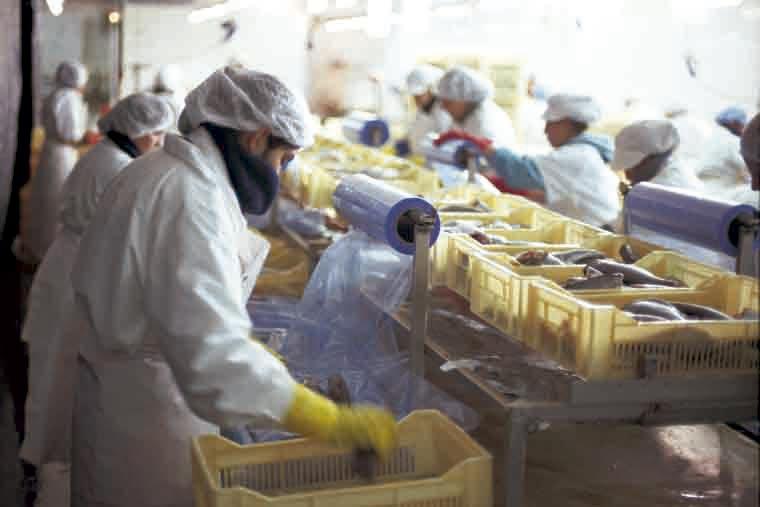 No repunta la demanda de cupo social de merluza en Chubut