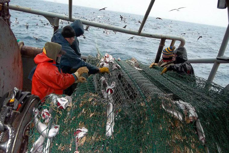 Revista Puerto - Pesca de merluza - 02