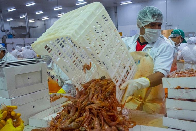 COVID-19: Se incrementó el ausentismo en plantas pesqueras