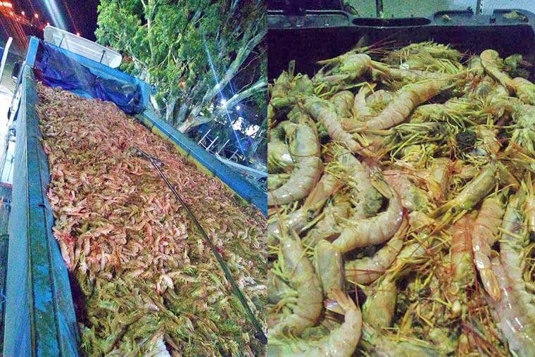 Revista Puerto - Langostino - SOMU - Los piquetes provocaron que el pescado se pudra - 02