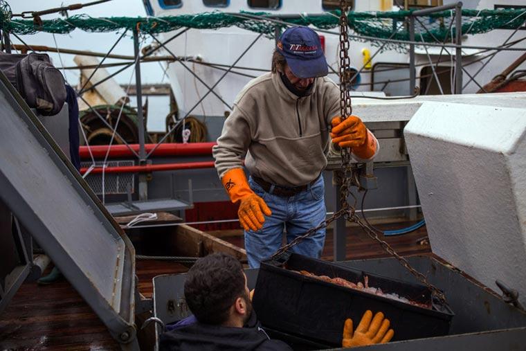 Langostino fresco para activar el trabajo en Mar del Plata