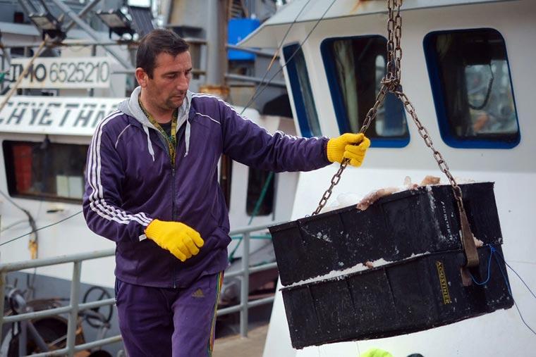 No se aumentará el límite de bycatch de calamar