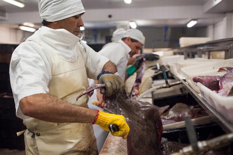 Revista Puerto - Actividad pesquera - 01