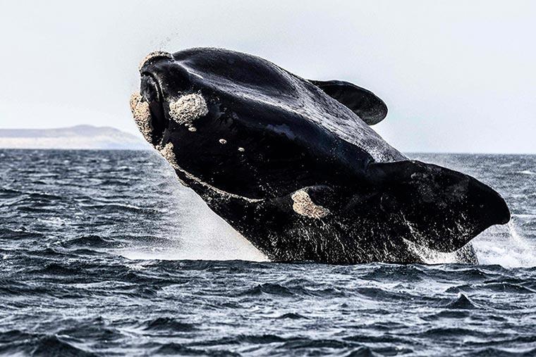 Impulsan la protección del Agujero Azul en el Mar Argentino