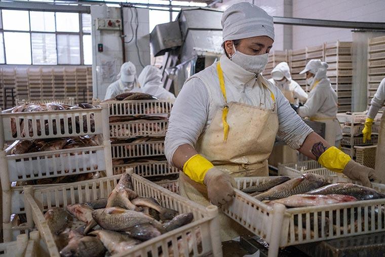 Revista Puerto - Mar del Plata - Plantas de procesamiento de pescado - 02