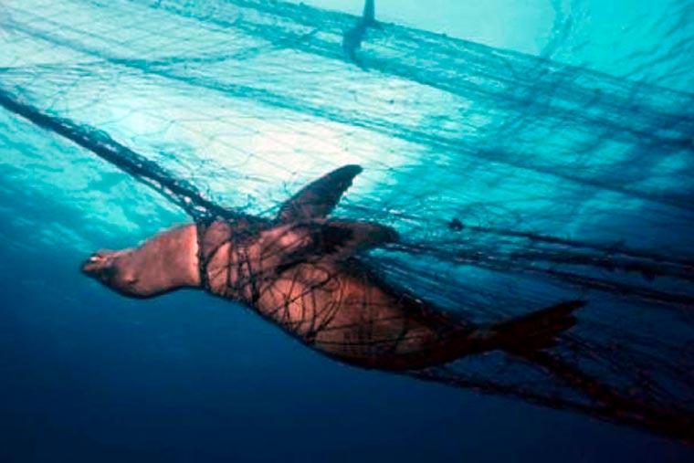 ¿Qué hay detrás de la ley de protección de mamíferos marinos de Estados Unidos?