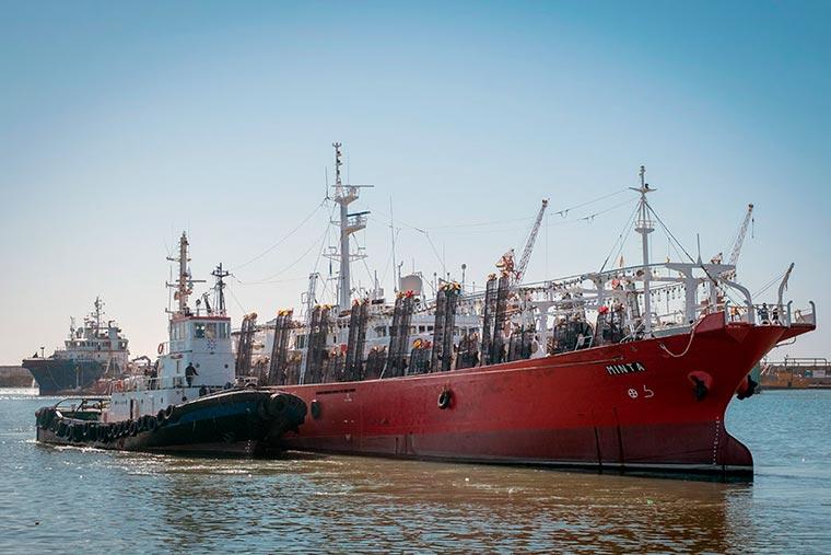 Zafra de calamar: poteros promediaron 19 toneladas por día