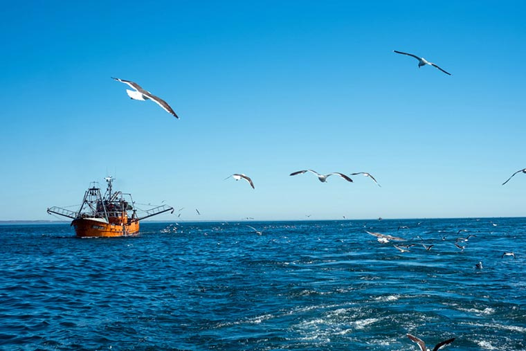 Charlas por el Día de los Océanos