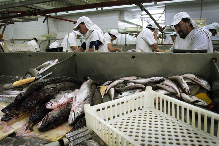 Revista Puerto - Mar del Plata - Planta de procesamiento de pescado