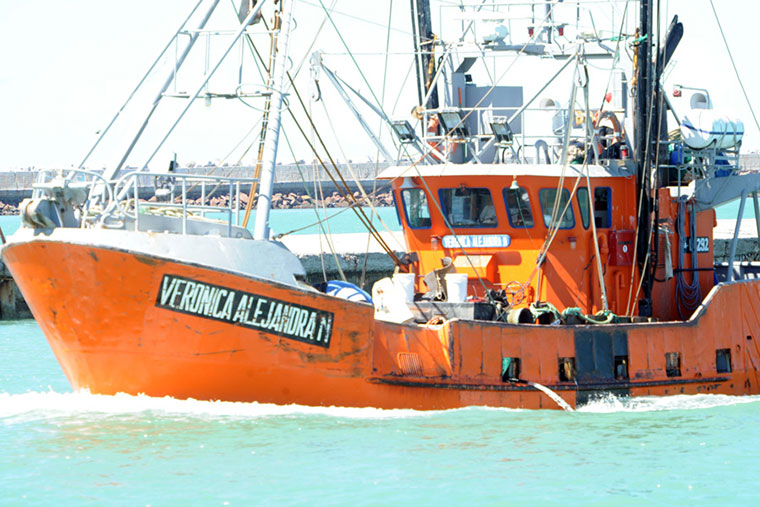 Catorce barcos evalúan el estado del langostino en Chubut