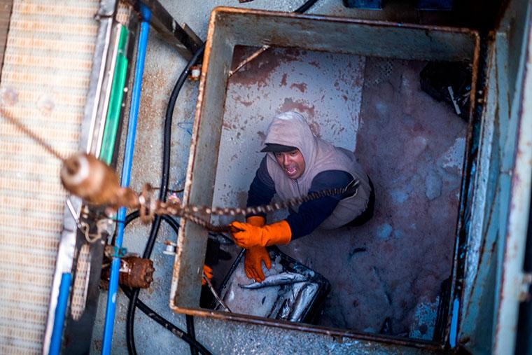 La merluza fresca dinamiza la actividad en Mar del Plata