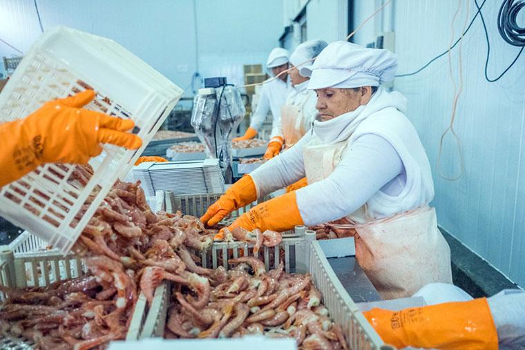 Revista Puerto - Regimen diferencial de jubilacion para trabajadores de la pesca - 02