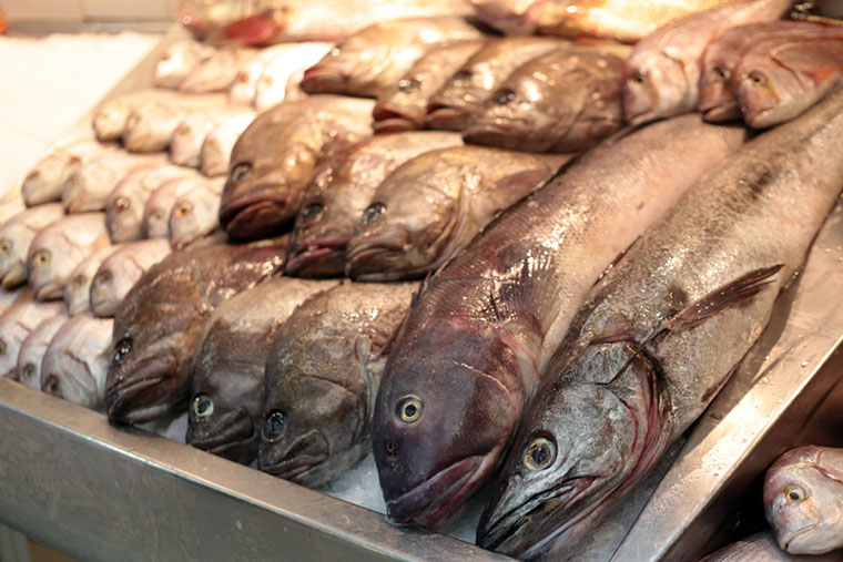Se realizará una jornada sobre trazabilidad de la pesca en Argentina